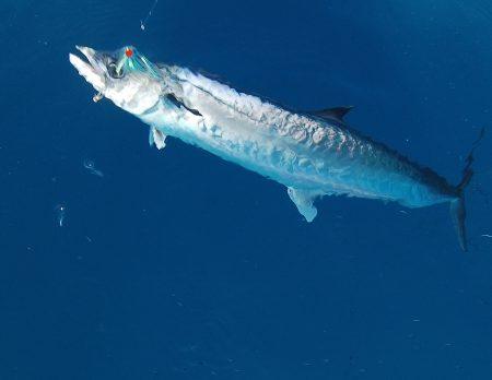 FWC Bumbs Up Kingfish Bag Limit For Florida Keys, West Coast